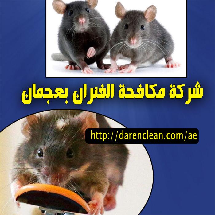 شركة مكافحة الفئران بعجمان