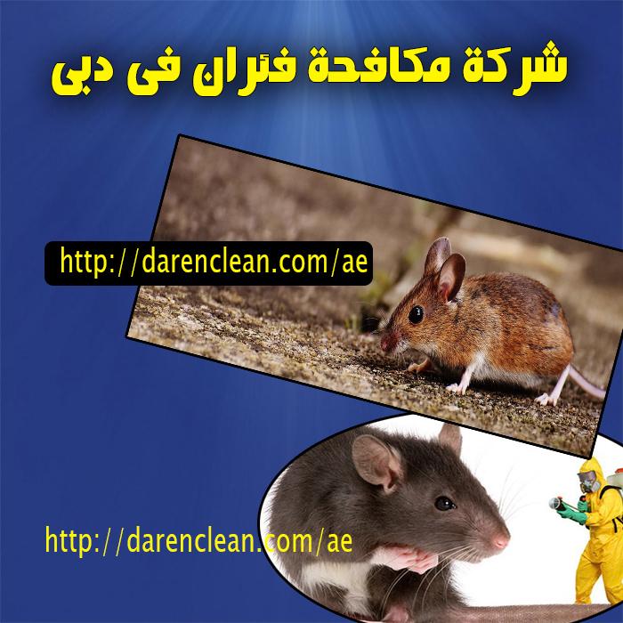 شركة مكافحة فئران في دبي