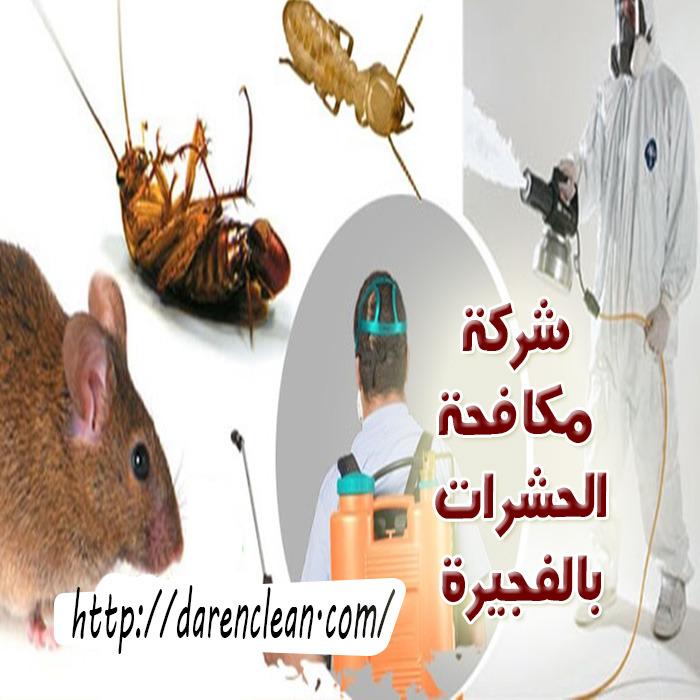 شركة مكافحة الحشرات في الفجيرة