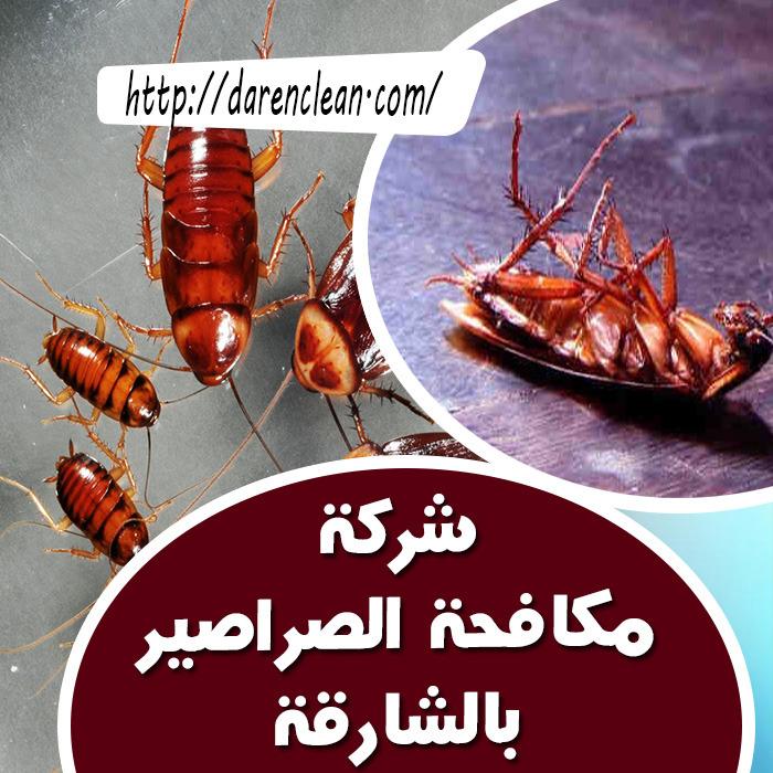 شركة بخ صراصير بالشارقة_مكافحة حشرات بالشارقة