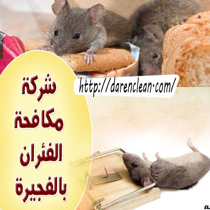 شركة مكافحة الفئران بالفجيرة_مكافحة قوارض بالفجيرة