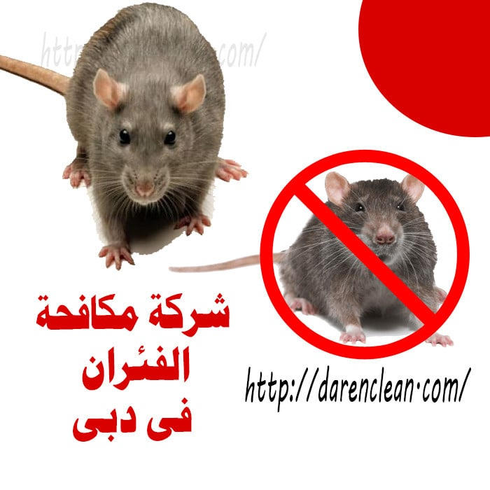 شركة مكافحة الفئران في دبي_ابادة قوارض بدبى