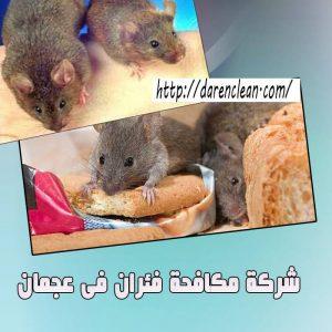 شركة مكافحة الفئران في عجمان