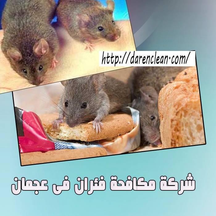 شركة مكافحة الفئران في عجمان_مكافحة حشرات فى عجمان