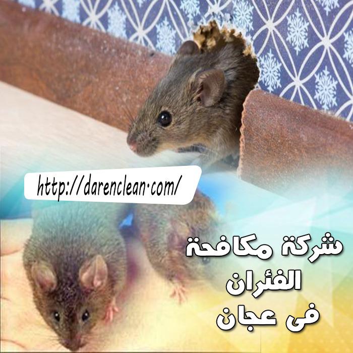 شركة مكافحة الحشرات في عجمان_شركة رش مبيدات فى عجمان