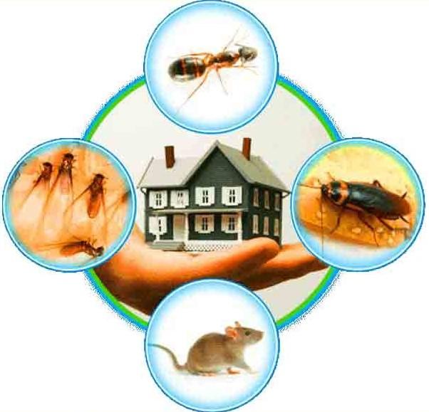 ارخص شركة مكافحة حشرات الشارقة _شركة مكافحة صراصير الشارقة