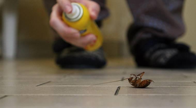 شركة بخ صراصير في دبي _ شركات مكافحة الحشرات بدبى
