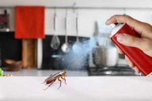 شركات بخ صراصير فى عجمان_شركة مكافحة حشرات فى عجمان